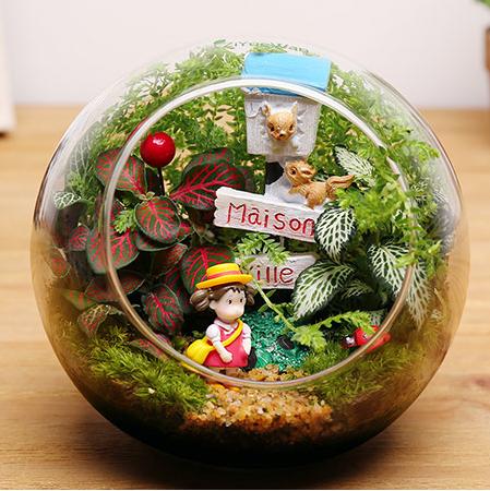 苔藓微景观生态瓶