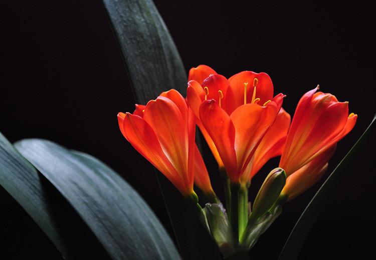 养花时,水浇多了盆栽有哪些异样出现