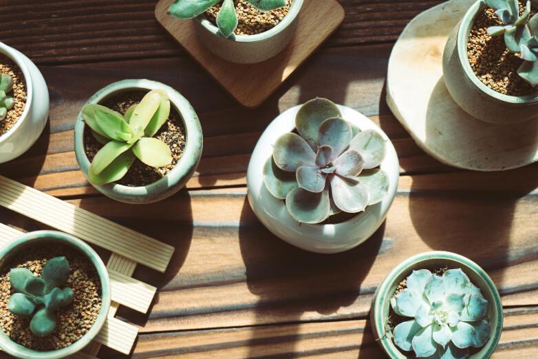 小科普,植物真能防辐射吗
