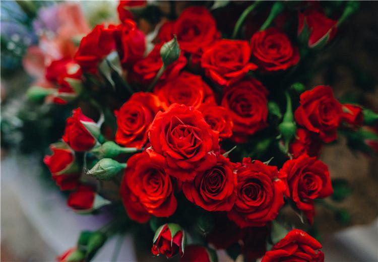 1分钟认清玫瑰品种