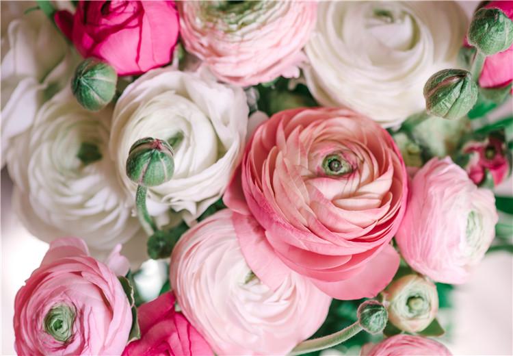 世界奇特的10种花,都在哪长着呢