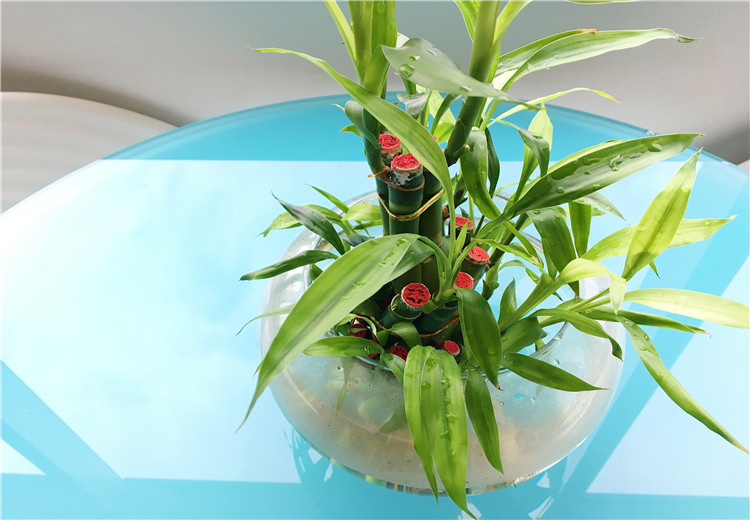 哪些植物靠水就可以成长
