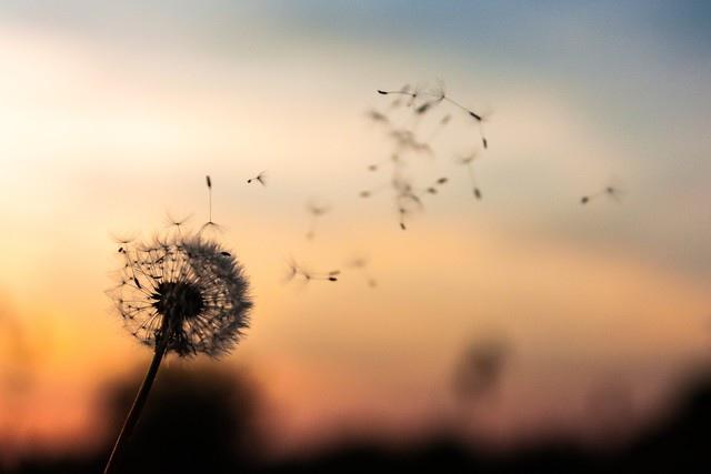 这八种花的爱情花语,你知晓几个?