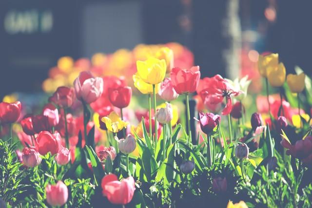 关于花儿的美丽传闻
