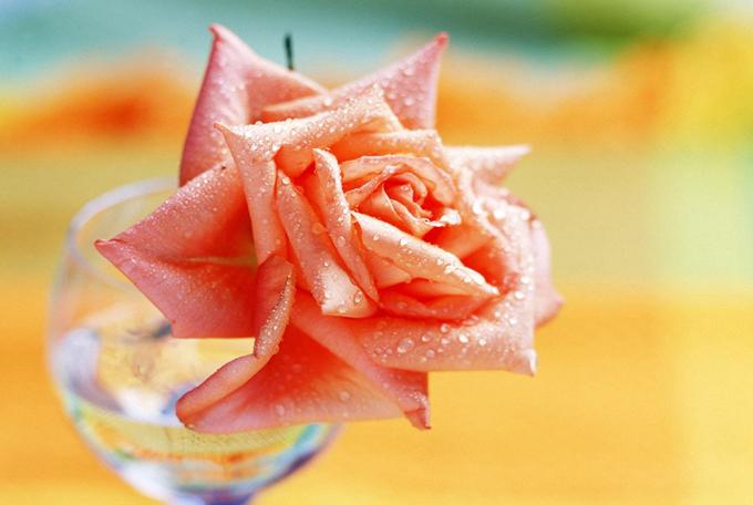 情人节送鲜花让人没办法拒绝的表白情话