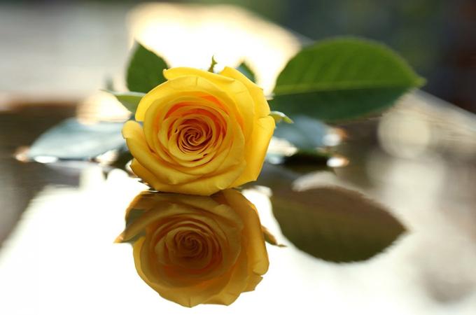 送黄玫瑰代表什么意义?