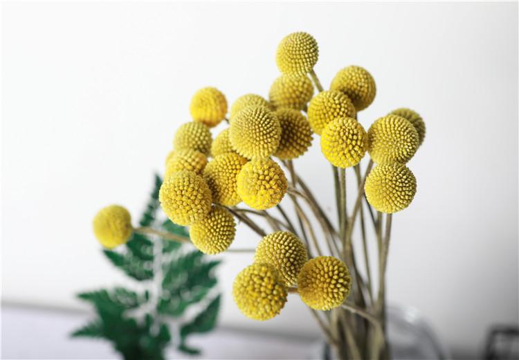 给大伙推荐几款适合家居插花的花材呦!