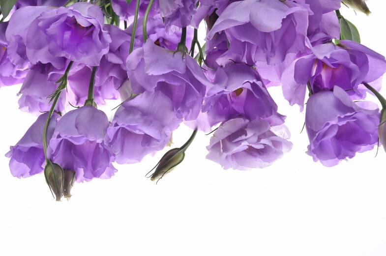 7种超颜值爆表的鲜花和绿植,天天只须看几眼